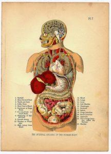 Inilah Organ Tubuh Manusia Dan Fungsinya Lengkap Official Website Initu Id