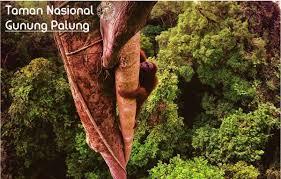 Foto Taman Nasional Kalimantan Gunung Palung