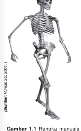 Penyakit Tulang Pada Manusia dan Cara Menjaga Kesehatan Tulang