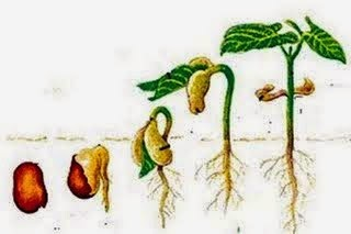 Mengenal Cara Perkembangbiakan Tumbuhan Generatif Dan Vegetatif Official Website Initu Id